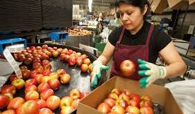Fruit Packers required in Canada