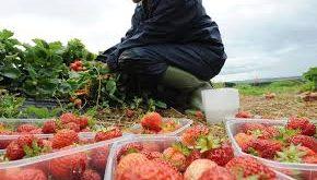 Fruit & vegetable picker jobs in Canada